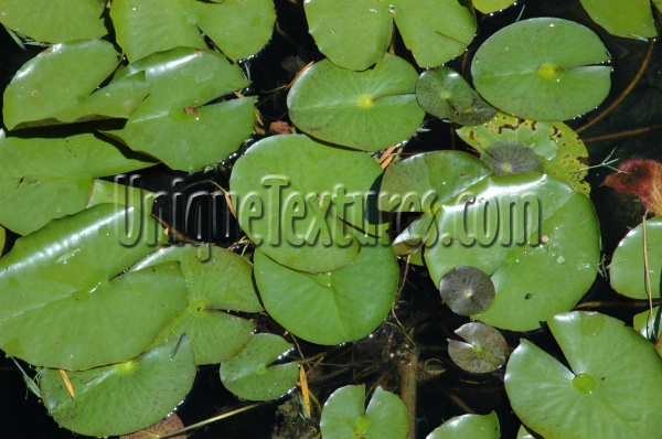 round wet natural liquid tree/plant green leaves