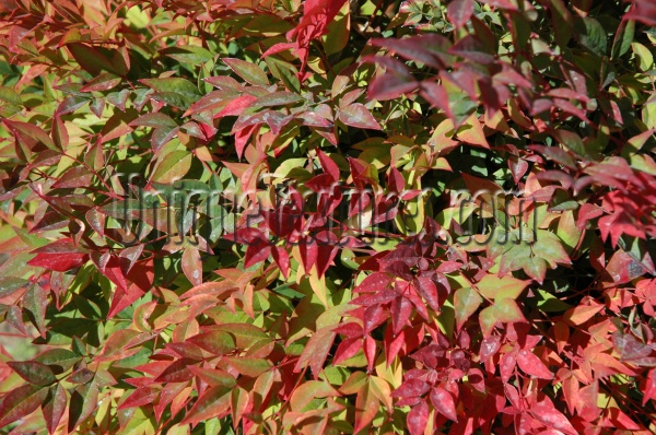leaves random natural tree/plant vibrant multicolored red