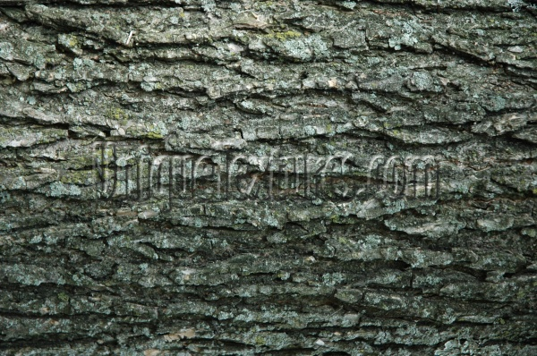 bark cracked/chipped natural tree/plant gray