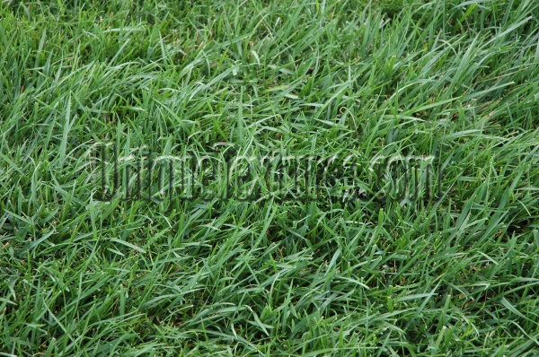 random natural grass green