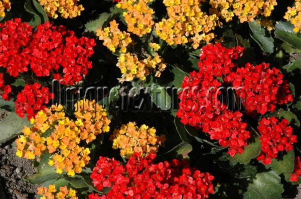 random natural flowers vibrant multicolored red yellow
