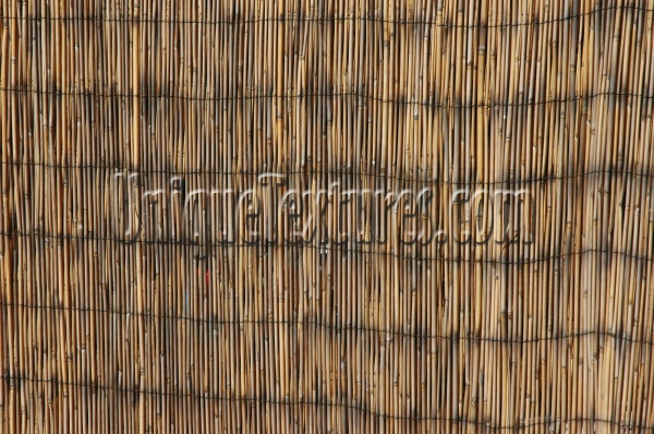 slats fence vertical weathered stained art/design architectural tree/plant dark brown