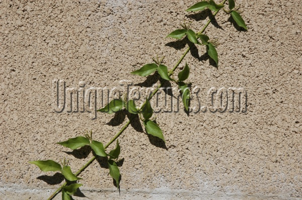 wall angled shadow architectural natural brick tree/plant tan/beige green
