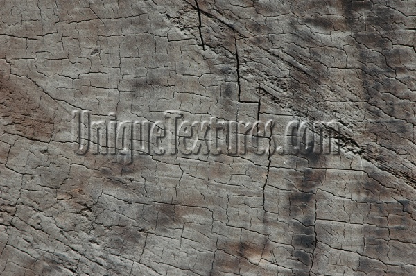 gray tree/plant wood natural architectural bleached weathered cracked/chipped random