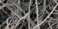 roots/twigs random dead natural wood tree/plant gray