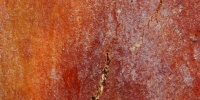 bark random natural wood tree/plant red
