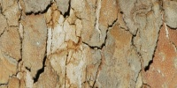 bark random cracked/chipped natural tree/plant tan/beige
