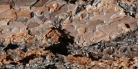 bark rough natural   tree/plant dark brown