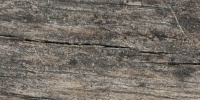 cracked/chipped     weathered natural tree/plant dark brown