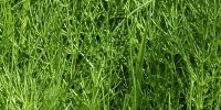 vertical random natural grass green