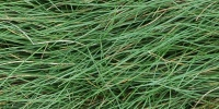 floor horizontal random natural grass green