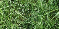 floor random natural grass green