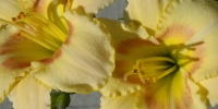 random shadow natural flowers vibrant yellow