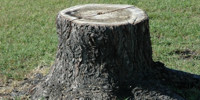 green gray tree/plant wood natural dead round oval
