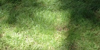 green grass natural shadow random oblique floor